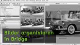 Bilder organisieren in Bridge