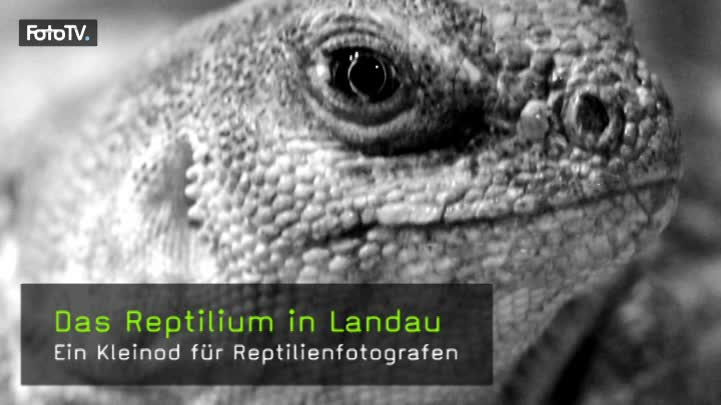 video das reptilium in landau. Black Bedroom Furniture Sets. Home Design Ideas