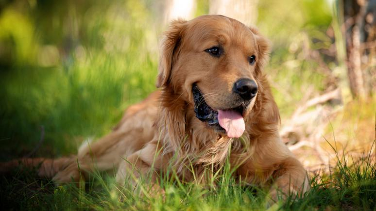 Schöne Hundeporträts in natürlichem Licht
