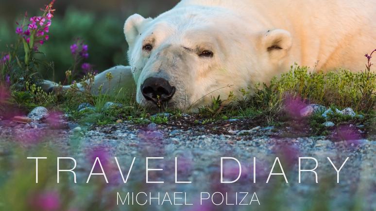 Travel Diary Ausstellungstour mit Michael Poliza