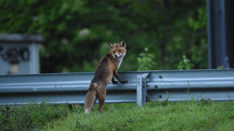 Das Arrangement zwischen Stadtlandschaft und Tieren als Stilmittel