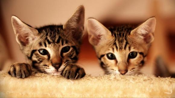 Katzen fotografieren
