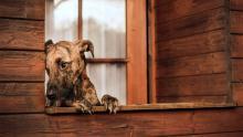 Hundefotografie im Garten