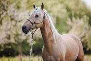 Sunny, Pferd, Halfter, Janis Jean Stoye, Pferdefotografin