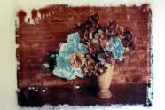Sonja Tausch-Treml, Positivprozess, Fotokurs, Fotoworkshop, Polaroid-Transferverfahren, Blumenfotografie