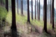 Wischtechnik, Baum, Landschaftsfotografie