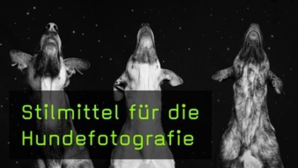 Drei Hunde vor Sternenhimmel