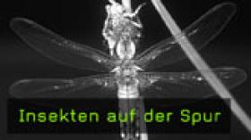 insekten-naturfotografie