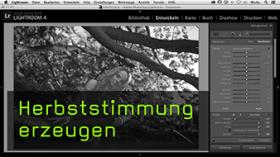 Laub umfärben in Lightroom