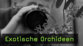 guido-sachse-exotische-orchideen-naturfotografie