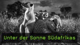 Wildlife-Fotografie von Heinrich van den Berg