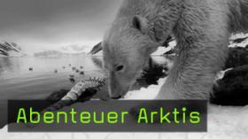 naturfotografie wildtierfotografie