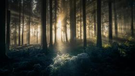 Mystische Lichtstimmung im Wald fotografieren