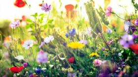 Tipps für gelungene Frühlingsfotos