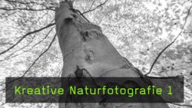 Hans Peter Schaub Landschaftsfotografie Waldfotografie Defokus Technik