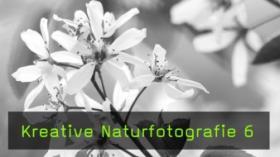 Kreative Fotografie im Frühlingswald, Techniken und Objektive in der Makrofotografie