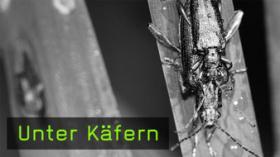 209-unter-kaefern-teaser-g.jpg