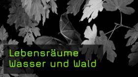 Heimische Naturfotografie Wasser und Wald