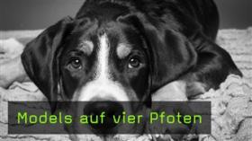 Hunde fotografieren, Umgang mit Hunden beim Fotoshooting