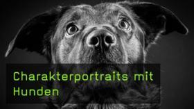 Heike Herden Hundefotografie