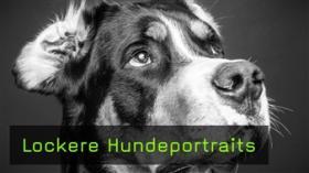 Video mit Heike Herden Hundefotografin
