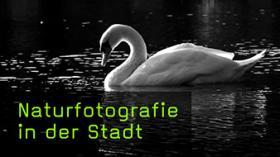 Naturfotografie in der Stadt