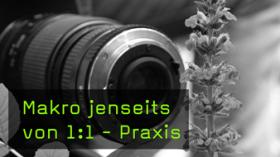 Pflanzen Makrofotografie
