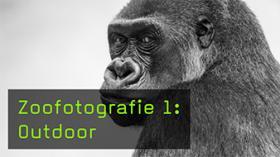 Zoofotografie 1: Outdoor