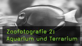Im Aquarium und Terrarium fotografieren