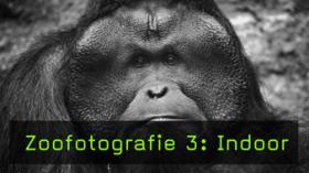 Zoo Indoorfotografie Urang-Utan