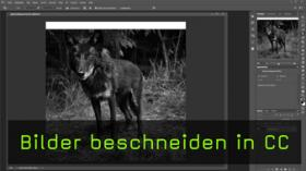 Freistellen in Photoshop