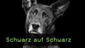 Ton in Ton Fotografie von Hunden