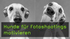 Hunde für Fotoshootings motivieren