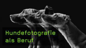 Hundefotografie als Beruf