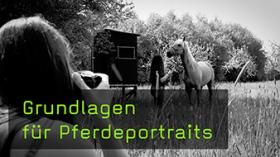Pferde richtig fotografieren