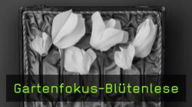 Gartenfokus-Blütenlese