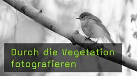 Tiere durch die Vegetation fotografieren