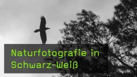monochrome Naturfotografie