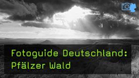Naturfotografie im Pfälzer Wald mit Harald Kröher