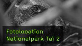 Fotolocations für die Regenwald-Fotografie