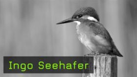 Ingo Seehafer Naturfotografie Eisvogel