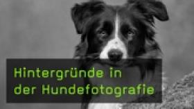 Teaser - FotoTV. Video zur Hundefotografie