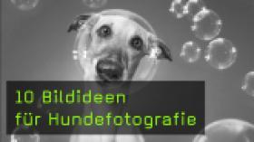 10 Bildideen für Hundefotografie