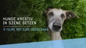 Kreative Hundefotografie