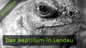 reptilium-landau-naturfotografie