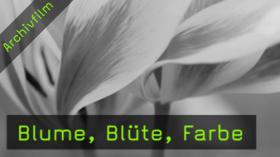 heinz-teufel-blumenfotografie-naturfotografie