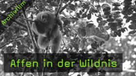 ingo-arndt-affen-in-der-wildnis-naturfotografie