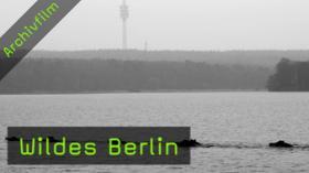 Naturfotografie, Berlin, wildes berlin, tierfotografie
