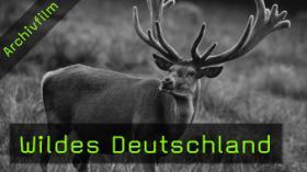 Norbert Rosing, Interview, Wildes Deutschland, Naturfotografie