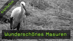 Masuren, Tierfotografie, Störche, Kraniche, Vogelfotografie